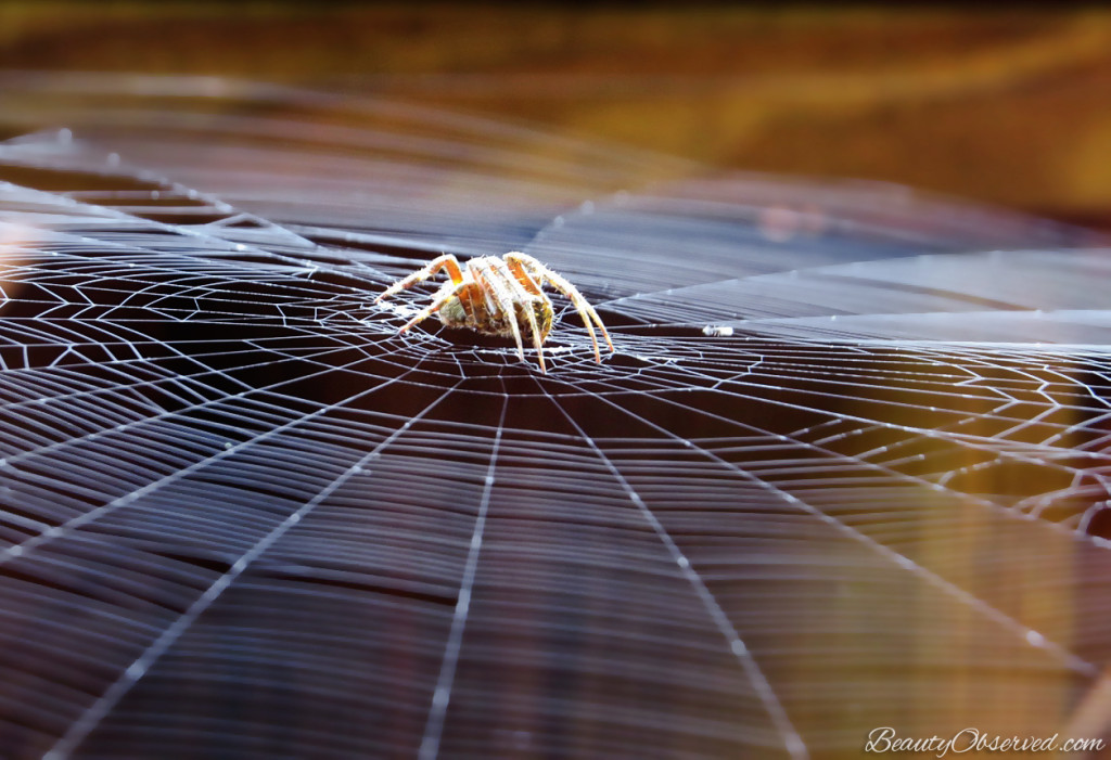 Beauty Observed A spider sewed at night