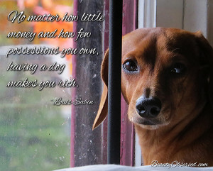 Great Doxie Memes