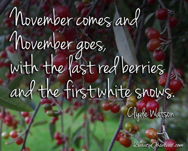 Visit BeautyObserved.com for more memes. November comes and November goes, with the last red berries and the first white snows. Clyde Watson