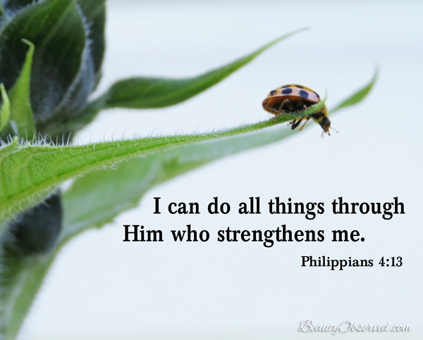 Visit BeautyObserved.com for more memes. I can do all things through Him who strenghtens me.  Philippians 4:13 #ladybug
