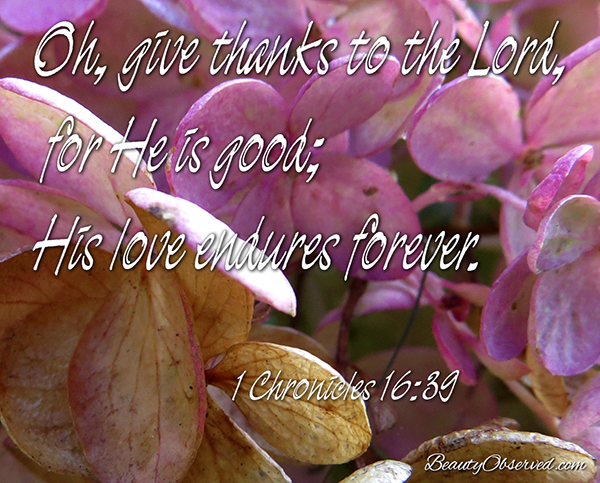 Visit BeautyObserved.com for more memes. Oh, give thanks to the Lord for He is good; His love endures forever. I Chronicles 16:29  Pee Gee Hydrangea, paniculata