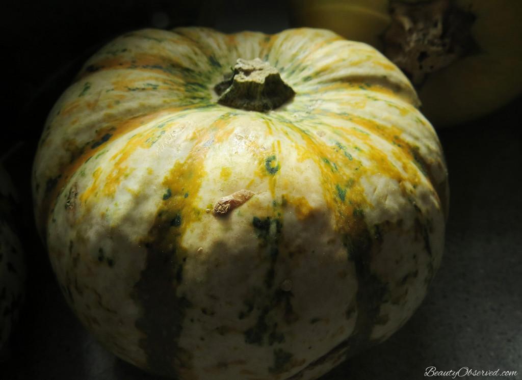 #tigerpumpkins #squash #gourds