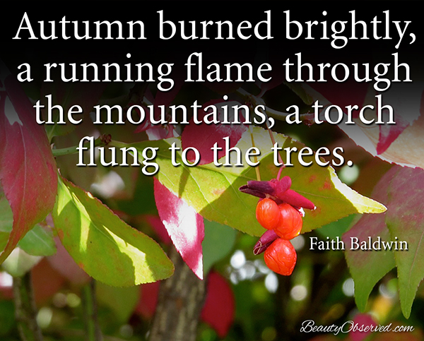 Visit BeautyObserved.com for more memes.  Autumn burned brightly, a running flame though the mountains, a torch flung to the trees.  Faith Baldwin