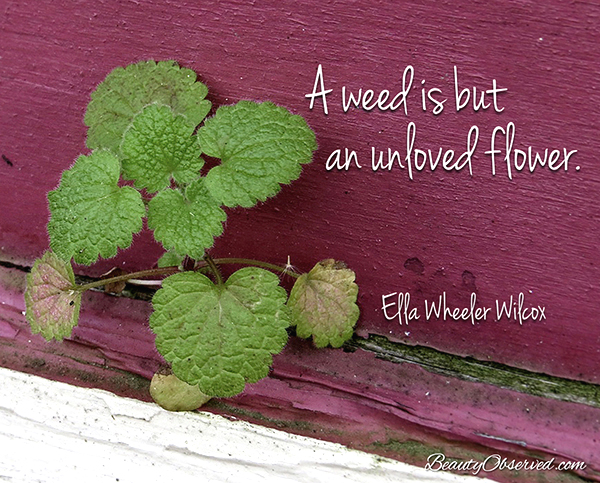 Visit BeautyObserved.com for more memes. A weed is but an unloved flower. Ella Wheeler Wilcox