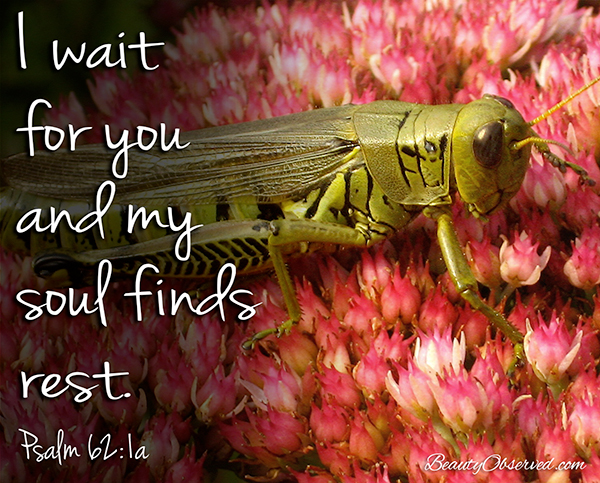 Visit BeautyObserved.com for more memes. I wait for you and my soul finds rest. Psalm 62:1a #grasshopper #sedum #Psalms