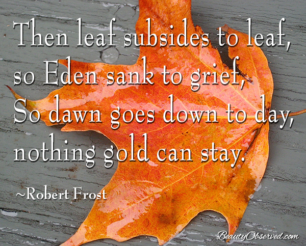 Visit BeautyObserved.com for more memes. Nothing gold can stay.  Robert Frost