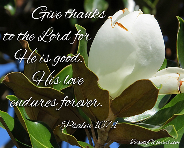 Visit www.BeautyObserved.com for more memes.  Give thanks to the Lord.  His love endures forever.  Psalm 107:1 #beautyobserved #magnolia