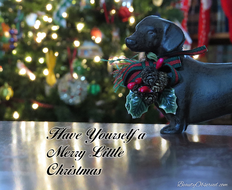 Visit BeautyObserved.com for more memes. #dachshund #doxie  Have yourself a merry little Christmas