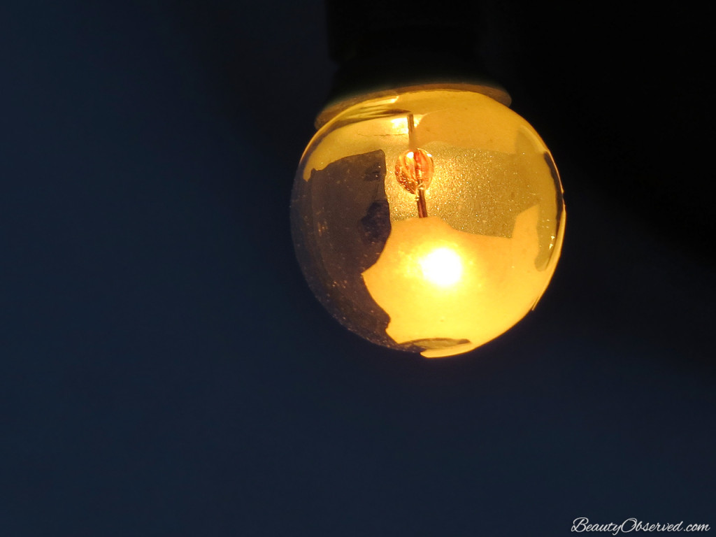 Light bulb filament.  Visit www.beautyobserved.com for beautiful photography and inspirational memes.