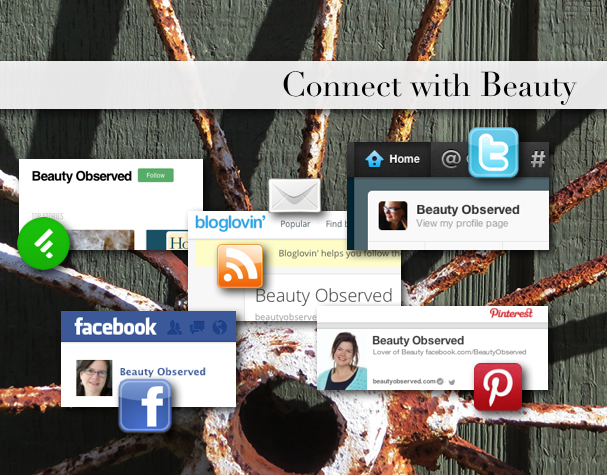 Connect with www.beautyobserved.com for beautiful photgraphy and inspirational memes.
