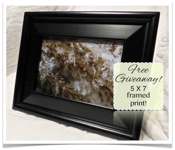 Free Giveaway Picture at BeautyObserved.com