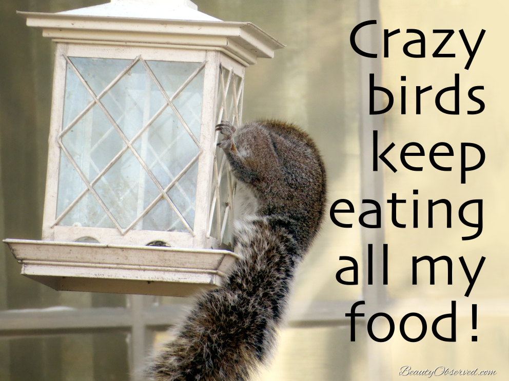 crazy-birds-squirrel