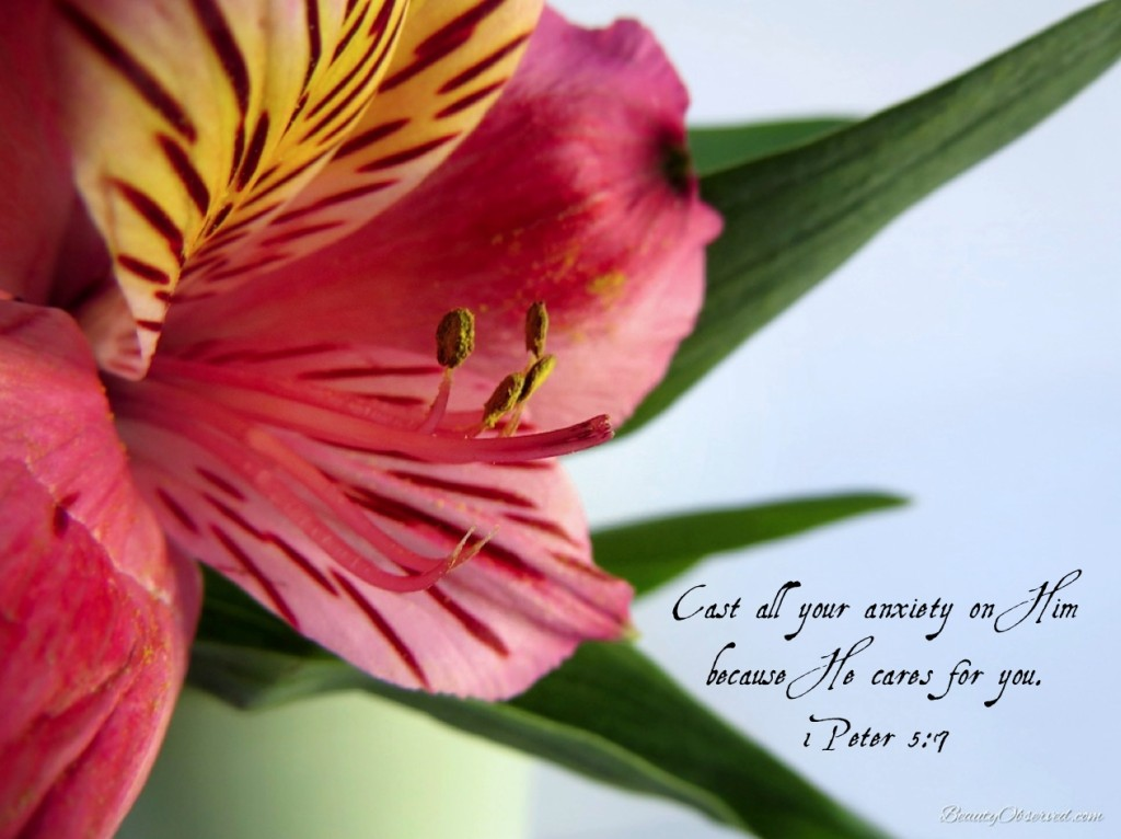 I Peter 5:7 Cast all your anxiety on Him because He cares for you.  Alstroemeria 1-peter-5-7-lily-beautyobserved