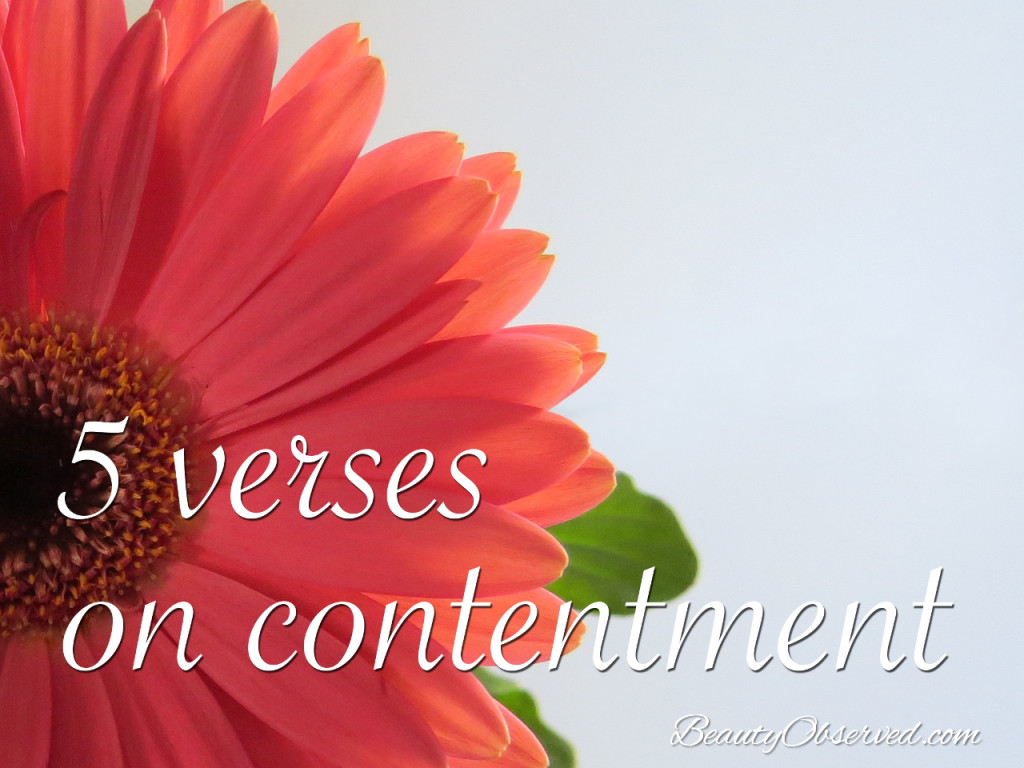 5 Bible Verses on Contentment Beauty Observed
