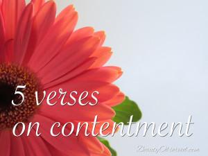 Gerbera-contentment