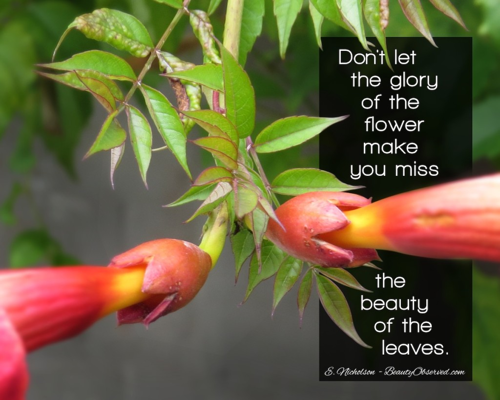 Don't miss the beauty of the leaves. Beauty Observed