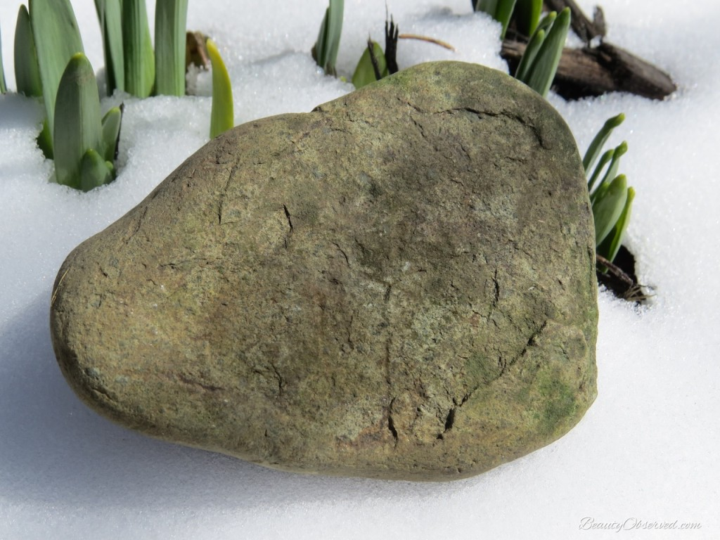 Beauty That's Hard to See Rock with Daffodil greenery