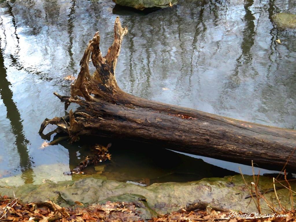 tree-river-color-web