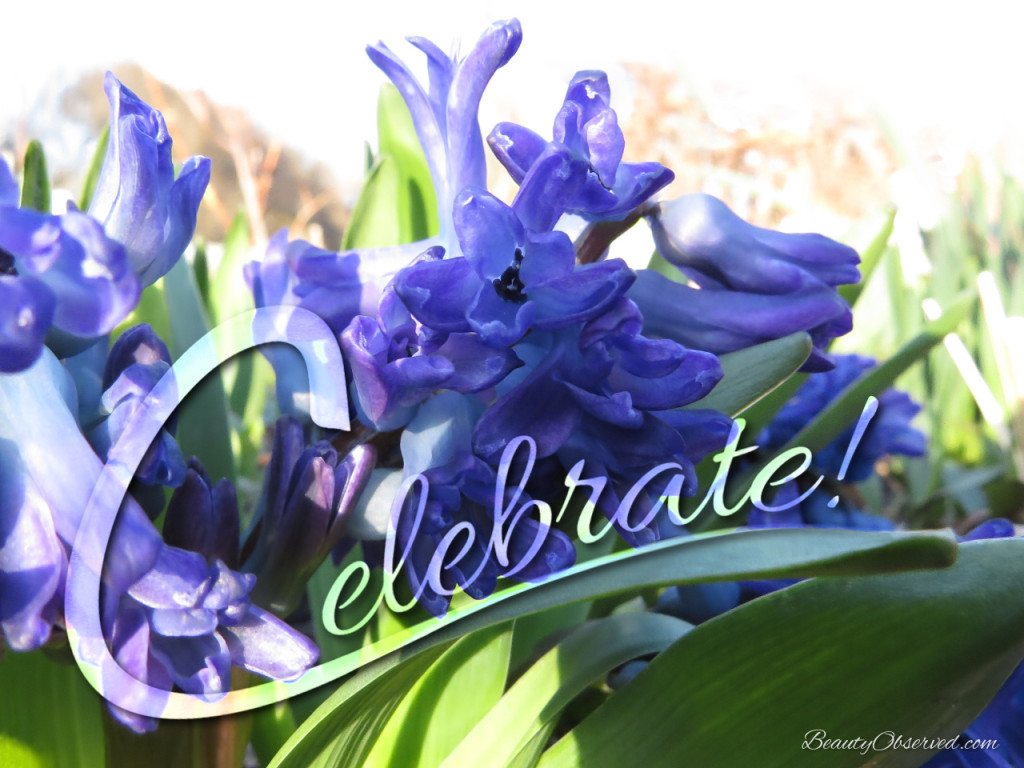 Celebrate Hyacinth Spring Flowers Easter