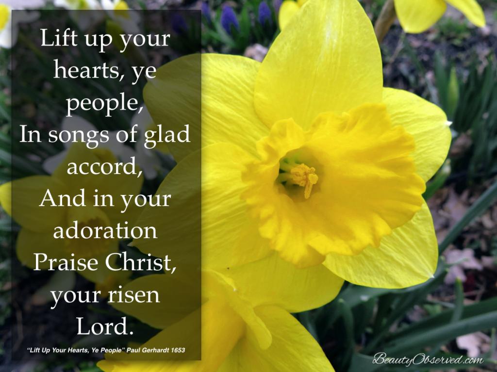 daffodil_lift_hearts
