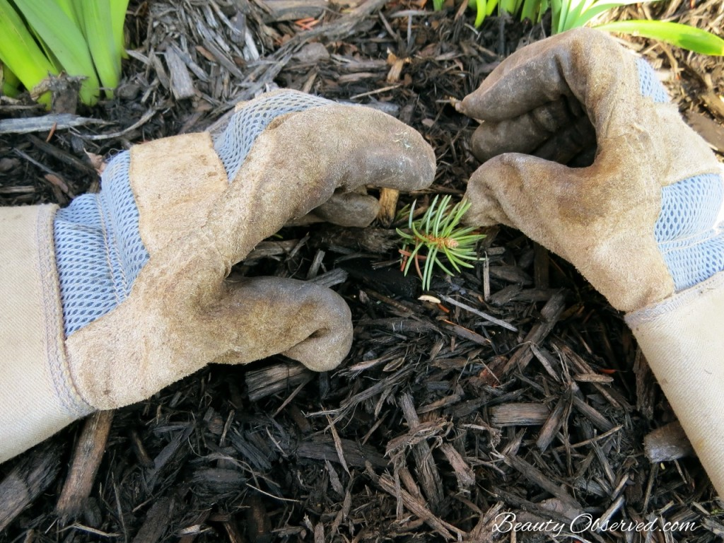 The four gardening tools I can't be without.  BeautyObserved leather gloves