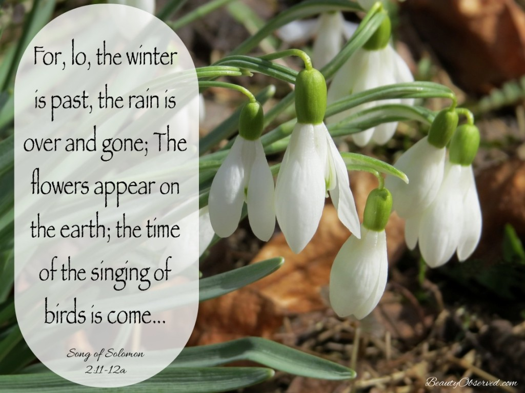 The Winter is Past - Song of Solomon - Snowbells
