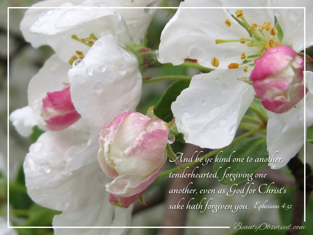 Blossoms-Apple-Raindrop-Ephesians-4-32-Beauty