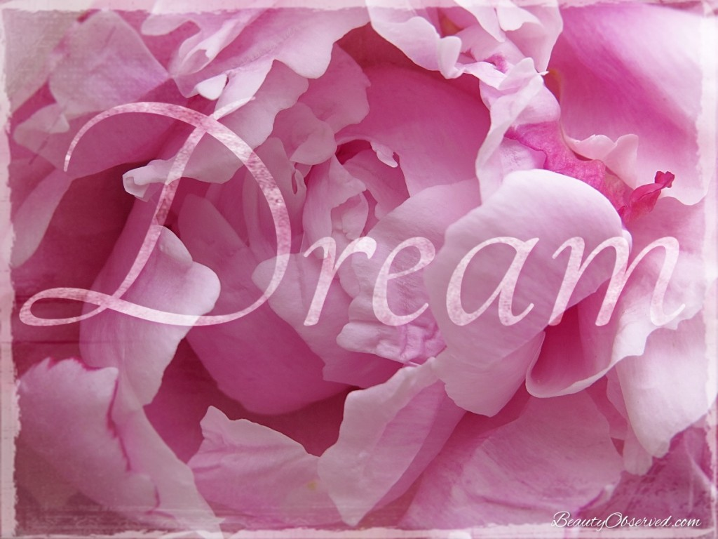 dream-beauty-observed