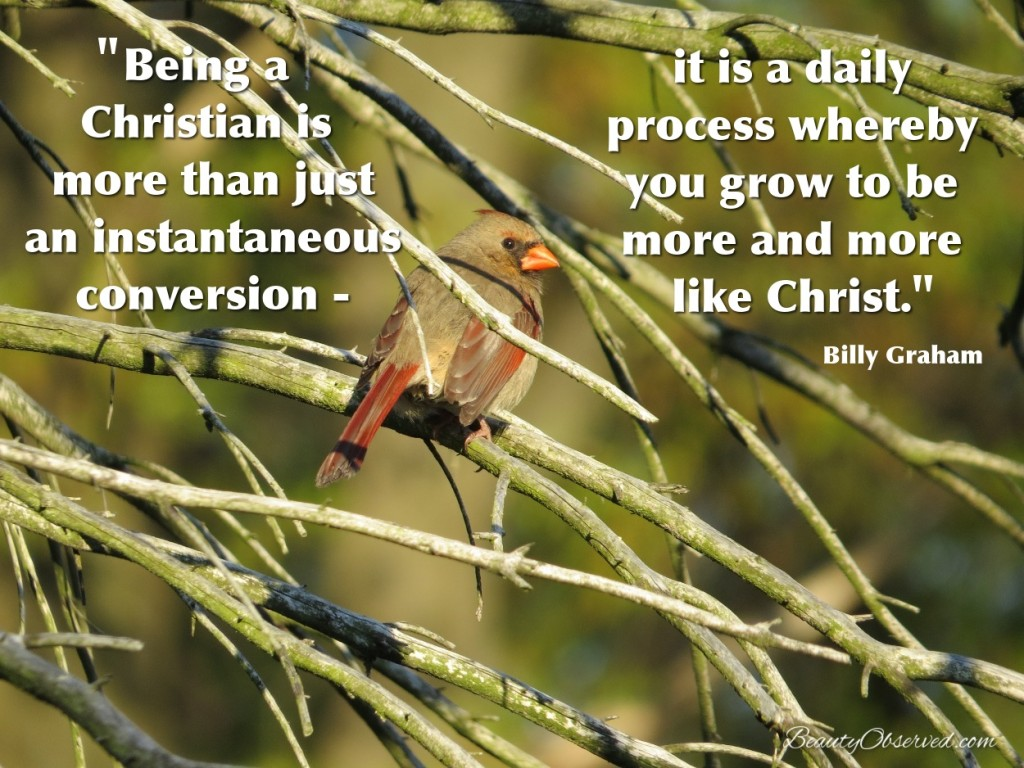 Being a Christian is more than just an instantaneous conversion- It is a daily process whereby you grow to be more and more like Christ.  Billy Graham Female cardinal