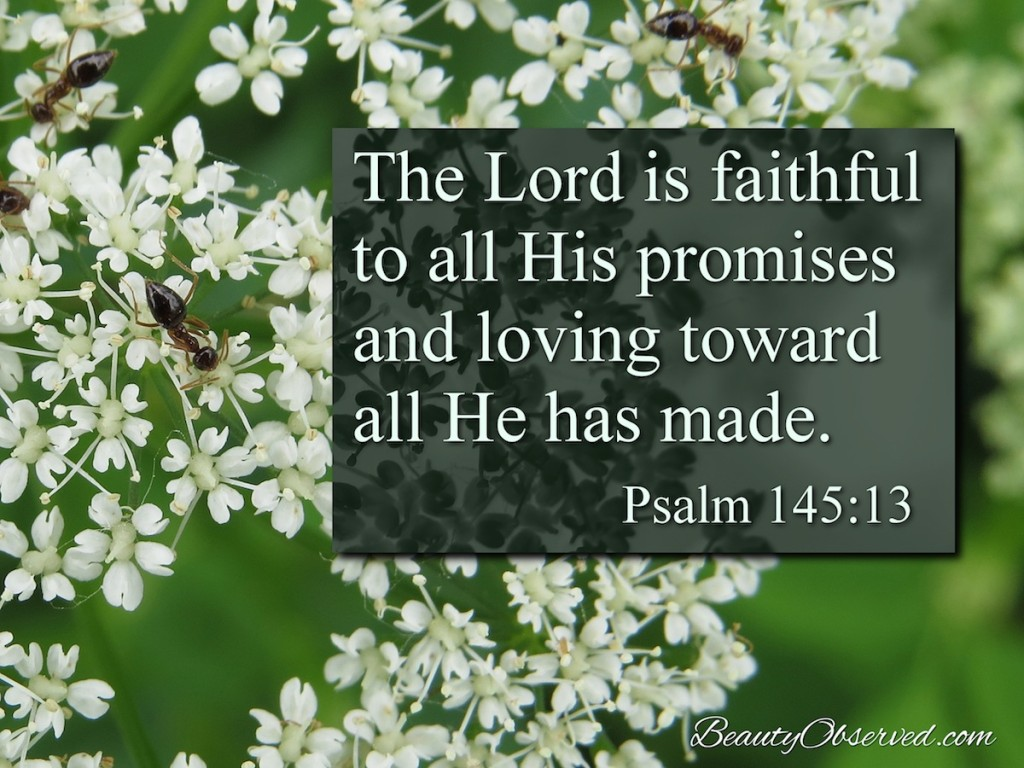 The Lord is faithful to all His promises and loving toward all He has made.  Psalm 145:13 ants on bishop's weed