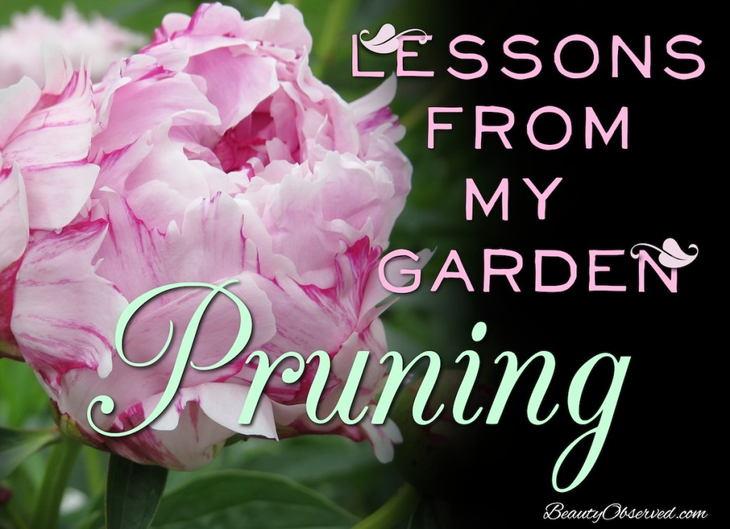 Lessons from my Garden:  Pruning pink peony
