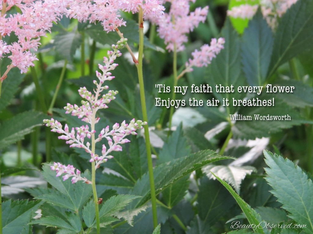 'Tis my faith that every flower Enjoys the air it breathes! ~William Wordsworth Pink Astible