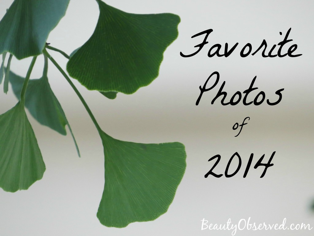 Gingko-favorite-photos-2014