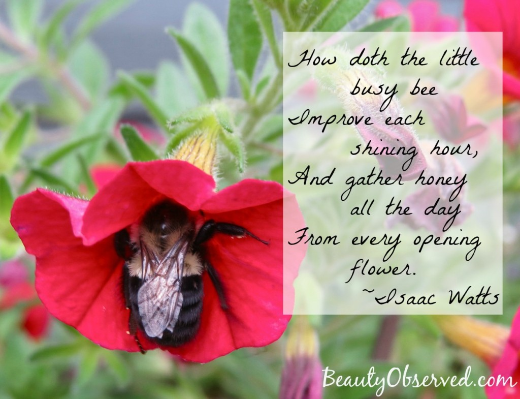 Isaac-watts-bee-quote