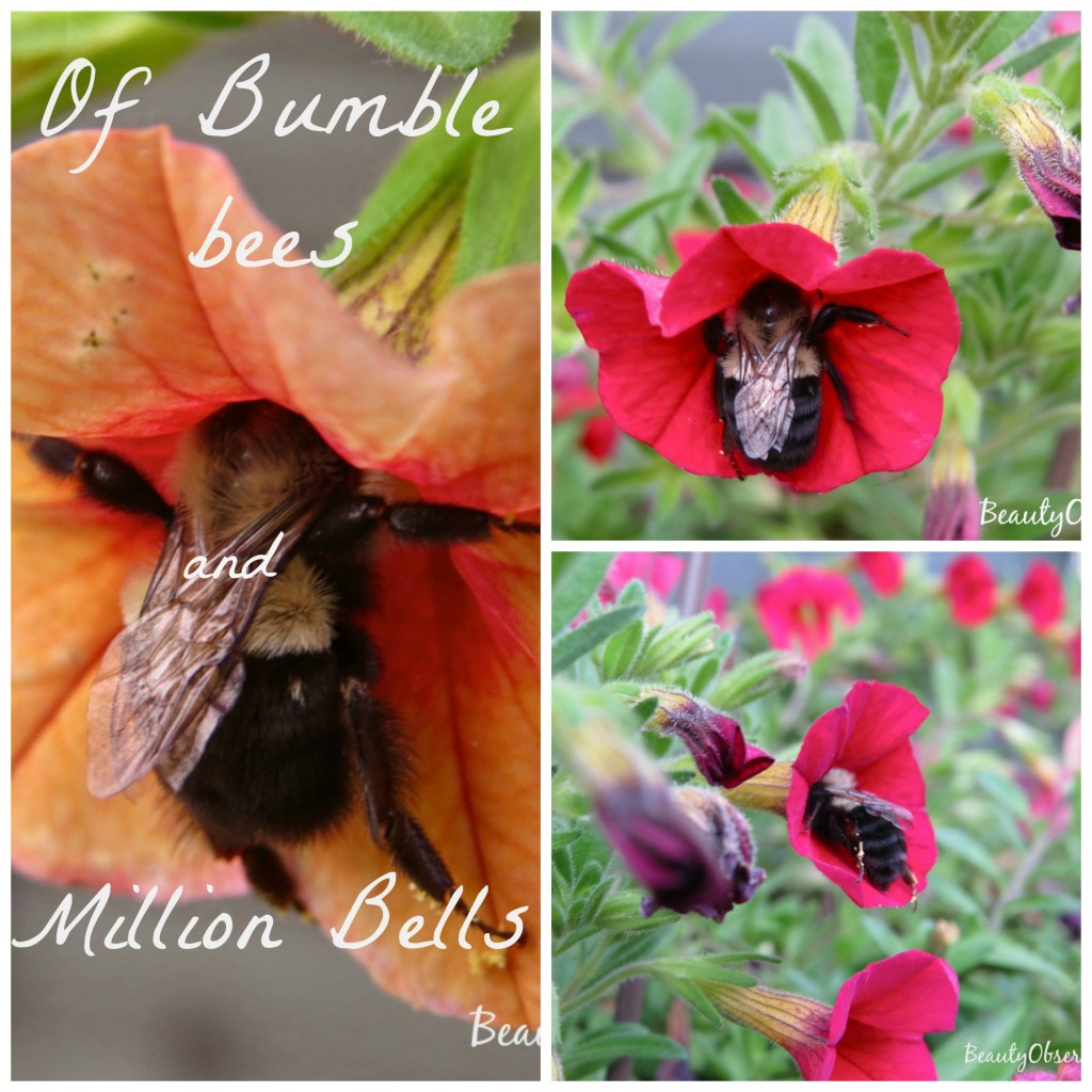 bumble-bees-collage
