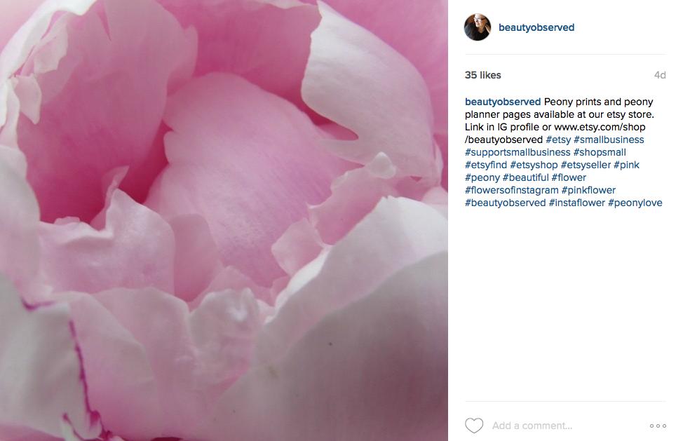 Instagram Pinkpeonies Pink Peonies Instagram 100