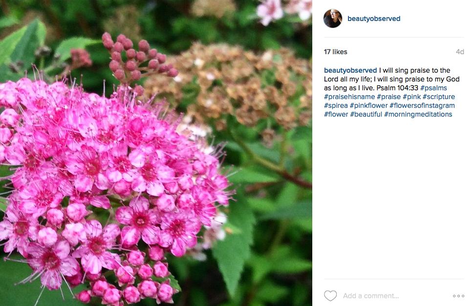 instagram-pink-spirea