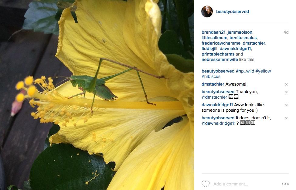 instagram-yellow-hibiscus-green-bug