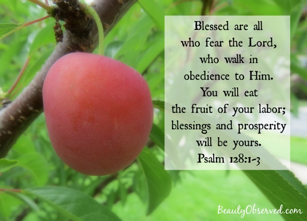 fruit-blessings-prosperity-psalm-128-1-3-plum