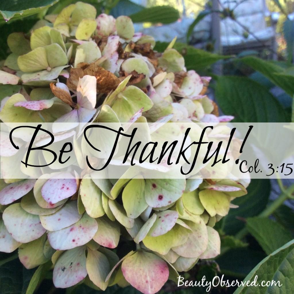 Be-thankful-col-3-15-hydrangea-inst