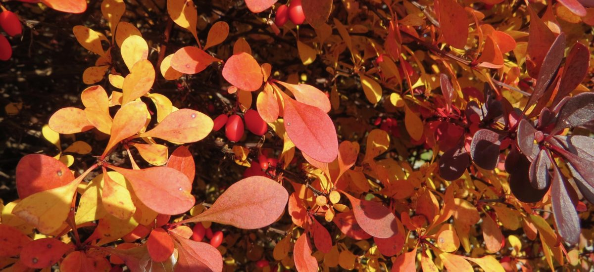 Amazing Grace in the Fall